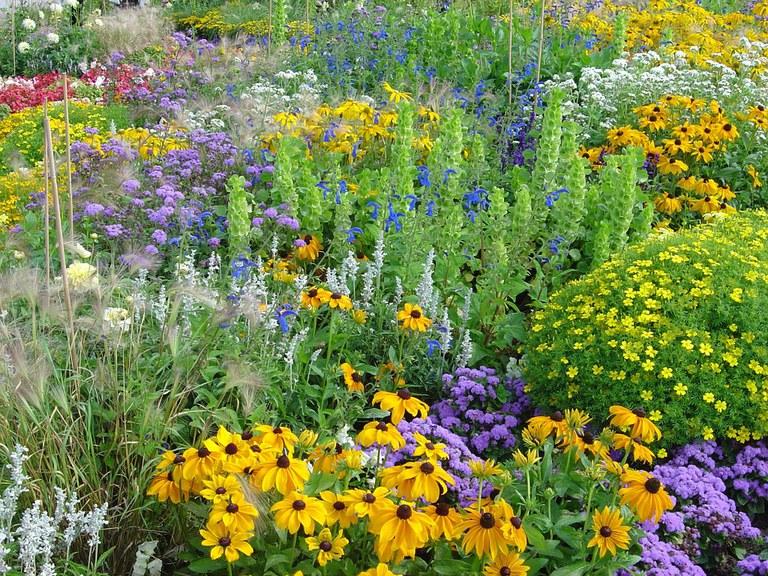 flowers-260202_960_720.jpg