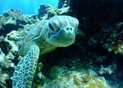 Meer vrouwelijke zeeschildpadden