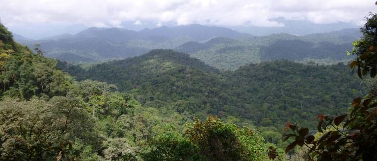 Ebo-forest-view-2-ZSSD-Daniel-Mfossa+(1).jpg