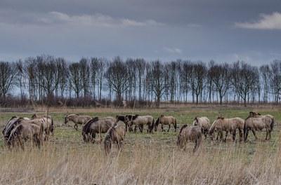 Paarden in een grasland
