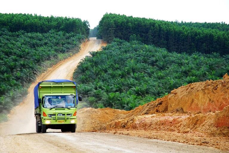 RS715_20070717 Palmolieplantage Indonesie - Ryan Woo-CIFOR - CC(1).jpg