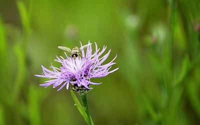 Insect op een bloem