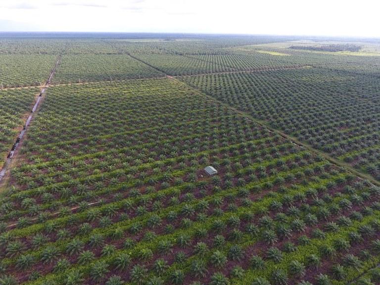 luchtbeelden palmolieplantages