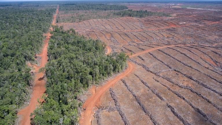 Ontbossing palmolie plantage Papua