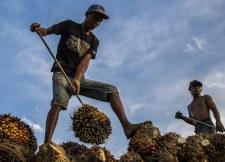 duurzame palmolie 225x162.jpg