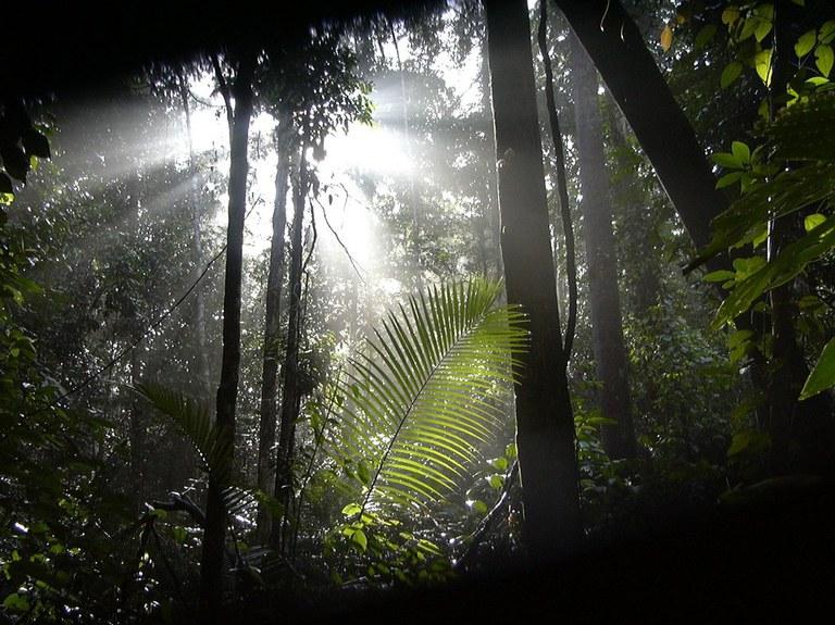 Varen in regenwoud met tegenlicht - copyright Eric Wakker